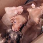 Alltag in BiH: 7 Puppies ausgesetzt