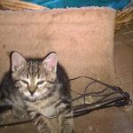 Katzenstreunerhilfe Österreich