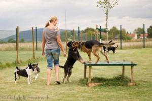Dogcity