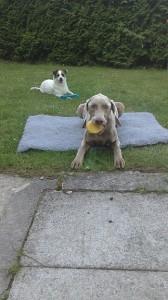 Hundeschule 1