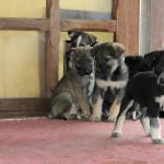 10 glückliche Hundebabies