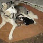 Mama mit ihren Babies