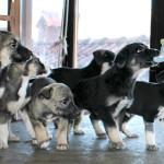 10 gerettete Babies