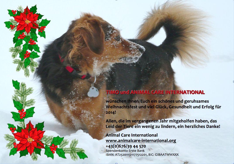 Weihnachtswünsche von TIMO und ACI -Animal Care International
