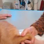 Physiotherapie für Viva