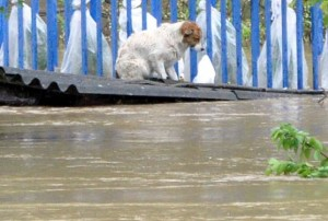 Überflutungen in BHI